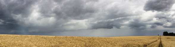 Field and storm panorama Stock Photography