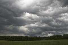 In the field before the storm. In the field of young wheat before the storm. Low dark clouds. Menacing clouds. Green, gray and gloomy. It will rain soon Stock Image