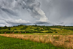 Field  and  stormy skies Royalty Free Stock Images