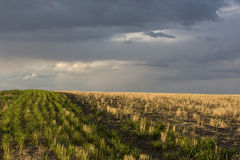 Field and a stormy sky. Wheat field after harvest and a stormy sky near Colorado foothills Royalty Free Stock Photos