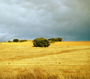 Field in stormy weather. Stormy weather over the yellow field, Spain Stock Photo