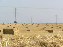Field of straw. Bales and energetics Royalty Free Stock Photo