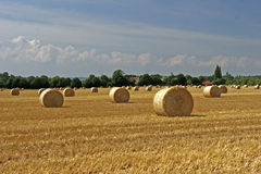 Field of straw Stock Photography