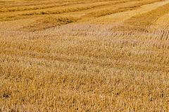 Field with straw Stock Image