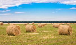 Field with straw bale. Harvested hilly wheat field with straw bale Stock Photography