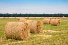 Field with straw bale. Harvested hilly wheat field with straw bale Stock Photos