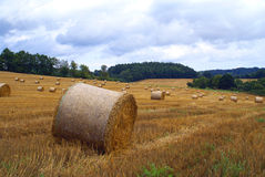 Field of straw bales. Fields of corn from the slimy straw bales Royalty Free Stock Image