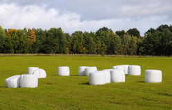 Field with straw bales Royalty Free Stock Photos