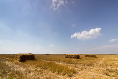 Field of straw bales. Bale of straw in a yellow landscape. Straw field blue sky. Square straw Bale. Stock Photos