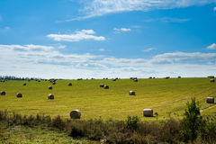 Field with straw bales. Green field with straw bales after harvest Stock Photography