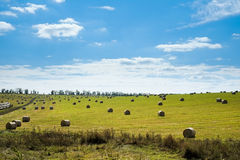 Field with straw bales. Green field with straw bales after harvest Royalty Free Stock Photography
