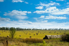 Field with straw bales. Green field with straw bales after harvest Royalty Free Stock Images