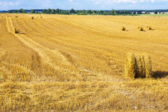 A field with straw bales after harvest Royalty Free Stock Photos