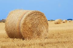 Field with straw bales after harvest. Straw bale architecture in crop filed summer royalty free stock photo