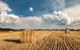 A field of straw bales. A field of harvested cereals and golden straw bales under big clouds stock image