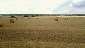 Field With Straw Bales stock video footage