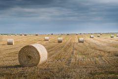 Field with straw bales Stock Image