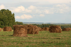 Field after straw cleaning in bales Royalty Free Stock Photos
