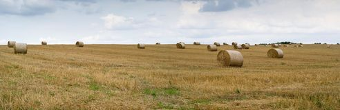 Field with straw in roll Royalty Free Stock Image