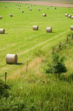 Field with straw rolls Stock Images