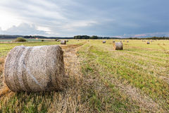 Field with straw rolls. Field with very many straw rolls with one prominent roll in the foreground. Overcast evening sky Royalty Free Stock Image