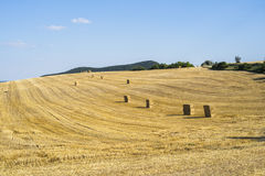 Field with straw stacks after harvesting Royalty Free Stock Photo