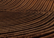 Field streps. Cultivated field texture frorms streps abstartct Royalty Free Stock Images