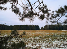 Field strewed lightly with the first snow November. Autumn landscape Urals. The turned yellow grass in the field is strewn lightly with the first snow. On a Stock Images