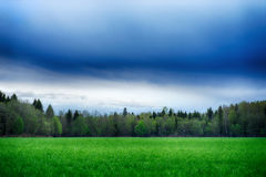 A field strewn with grass and forest. Summer landscape Stock Images