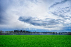 A field strewn with grass and forest. Summer landscape Stock Photo