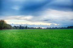 A field strewn with grass and forest. Summer landscape Royalty Free Stock Photography