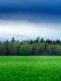 A field strewn with grass and forest. Summer landscape Royalty Free Stock Photo