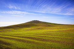 Field striped waves and olive trees uphiill. Tuscany, Italy Royalty Free Stock Photography
