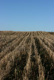 Field of stubbles Royalty Free Stock Photos