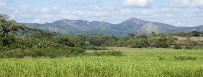 Field of sugarcane and mountains in Cuba. Panoramic field of sugarcane in Los Angenios valley and mountains, Cuba Royalty Free Stock Photos