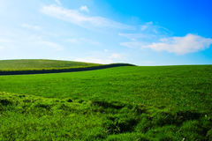 Field in summer Stock Images