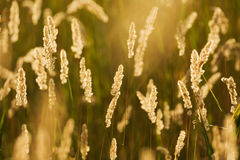 Field in the summer stock image