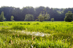 Field in the summer Stock Photography