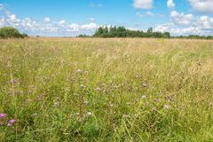 Field in summer day Stock Image