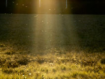 Sunset at countryside. Field at summer, in Finland Stock Images