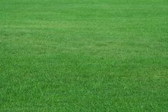 Field of summer grass Stock Images