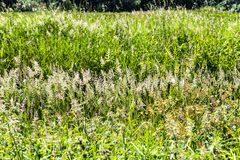 Field of Summer Grasses Poster stock images