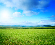 Field of summer green geass Royalty Free Stock Images