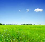 Summer landscape. Field and sky Stock Images