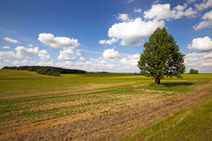 field in summer Royalty Free Stock Photography