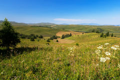 Field summer mountain Altay Stock Photography