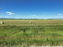a field in the summer with rolls of hay royalty free stock image