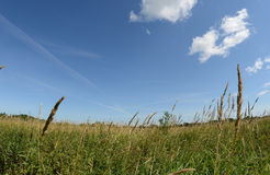 Field in summer sunny day. View from the field in sunny summer day Stock Image