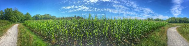 Field in summer time Stock Image