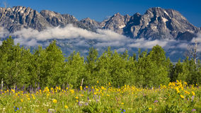 Field of Summer Wildflowers in the Tetons Stock Photos